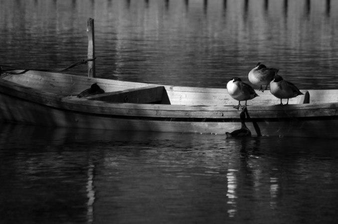 湖も白黒でオシャレ。